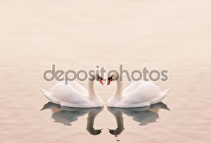 лебеди, сердца