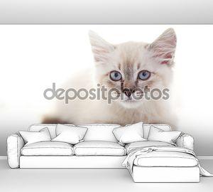 Портрет сибирского котенка