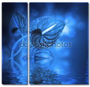 Синие бутоны белокрыльника
