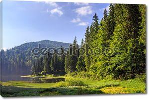 Озеро в горах, в окружении соснового леса
