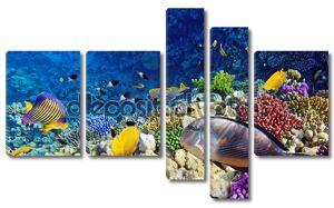 Кораллы и рыбы в красный Sea.Egypt