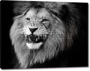 Дикий лев, портрет