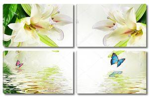 Отражение в воде больших белых лилий
