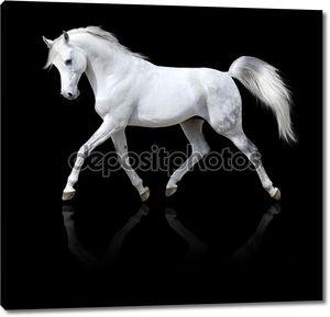 Белая лошадь, сложенные