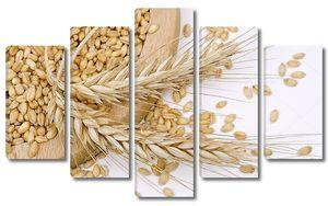 Пшеница и зерна на белом фоне